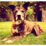 Dog cancer – dogtime