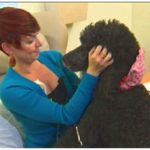 Feeding your dog during chemotherapy